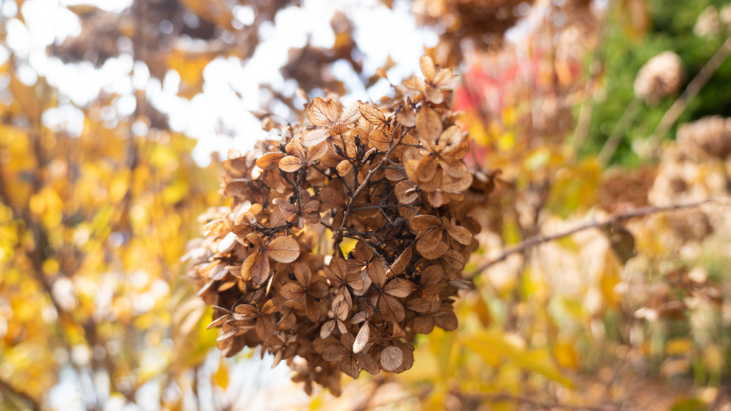 Duke-Gardens-Brown-flowers-P1480045