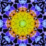 Kaleidoscope Cats