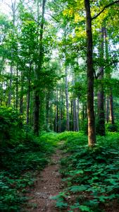 Creek_Trail_P1640025