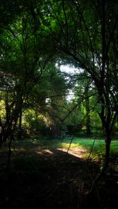 Creek_Trail_P1640047