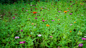 Orange_WIldflowers_P1640021