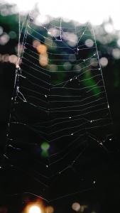 Spider_Web_P1630717