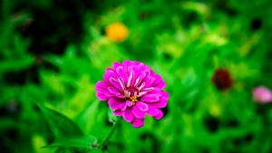Wildflower_Pink_P1640019